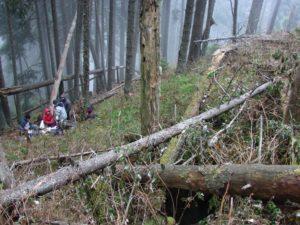 Padurea fermecata de langa Avenul din Grind